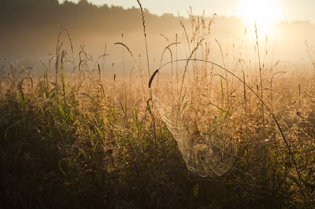 flower spider: Photo of sunrise over the misty meadow Stock Photo