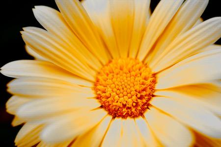 happynes: yellow flower Stock Photo