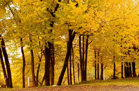Photo of a elm grove in autumn Stock Photo