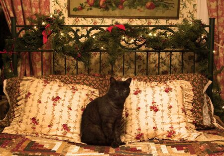 christmas pussy: Photo of black cat on Christmas decorated bed