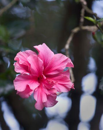 haiku: Photo of a tropical flower at the Haiku Gardens, on Oahu, Hawaii