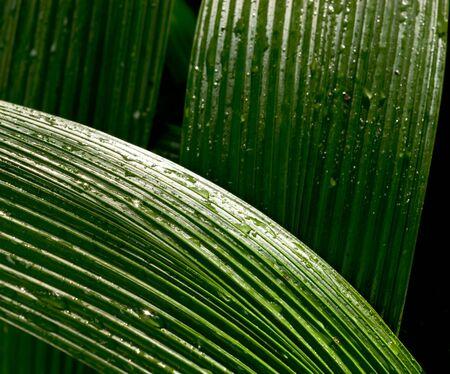 haiku: Leaf Abstract from the Haiku Gardens, on Oahu, Hawaii