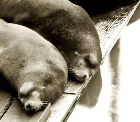 Photo of two sleeping sea lions at the East Mooring Basin in Astoria, Oregon