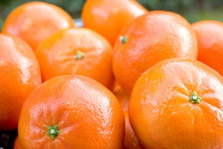clementine: Photo of a bowl of Clementine Tangerines
