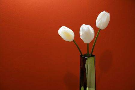 Photo of  three white tulips on and orange background photo