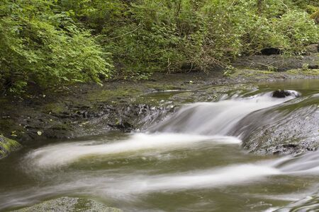 moscerino: Foto di gnat Creek nella primavera del