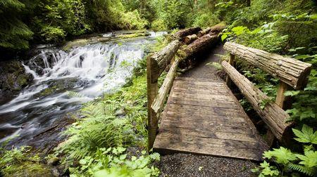 moscerino: Foto di Gnat Creek fretta da piccolo ponte di legno  Archivio Fotografico