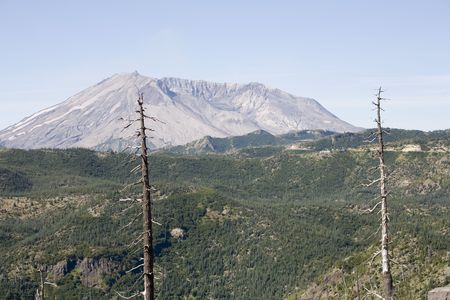 Photo of a rebirth of a valley, near Mount St. Helens, in the Gifford Pinchot National Forest. Stock Photo - 530264