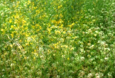 avant garde: Photo of an impressionist field with wildflowers. This is not blurred, but rather a sandwich of eight exposures combined into one.