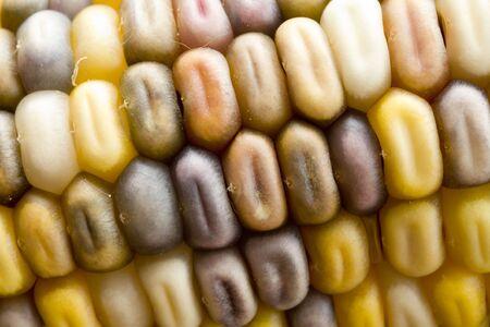 Photo of multi-colored corn cob.