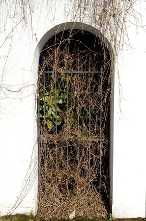 Photo of a white stucco archway and wrought iron gate overgrown with vines.