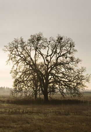 Single tree and pasture  in early morning light. photo
