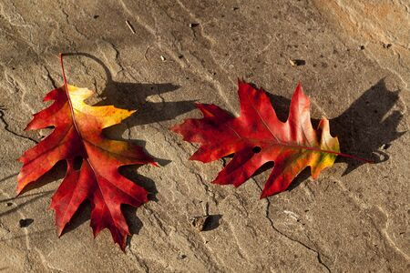 roughly: Beautiful autumn leaves on a roughly textured stone.