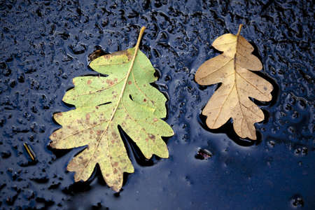 roughly: Beautiful autumn leaves on wet, roughly textured concrete. Stock Photo