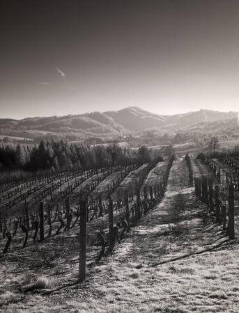 willamette: Infrared  of vineyards in the Willamette Valley