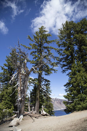 A photo of a dead tree at the rim of Crater Lake  photo