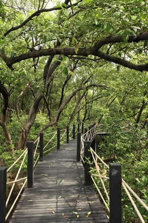 Mangrove forest Stock Photo - 9135497