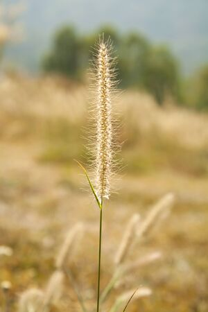 flower of grass. photo