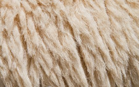 Sheep skin Background,Fleece is thick and soft. photo