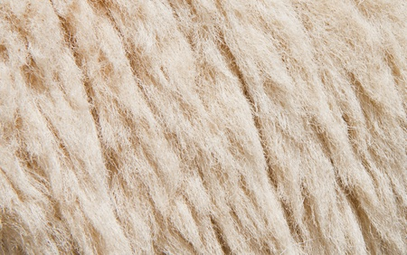 sheep skin: Sheep skin Background,Fleece is thick and soft. Stock Photo