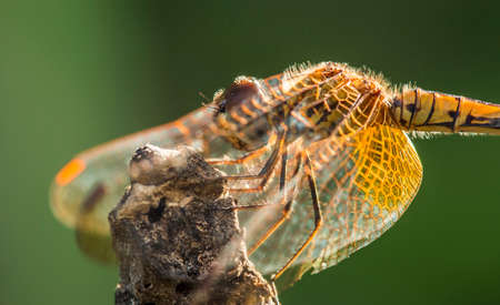 Dragonfly in the Garden photo