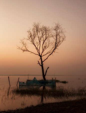 arboles secos: Árboles muertos en el lago. Tailandia