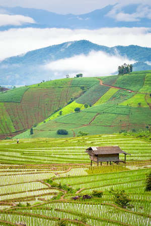 Rice terraces in the rural mountain
