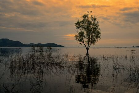 Single tree in the lake on sunset. Stock Photo