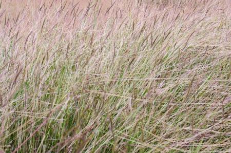 Background : grass Stock Photo