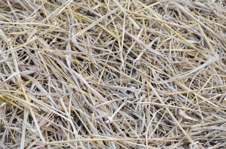 wheat residues background Stock Photo