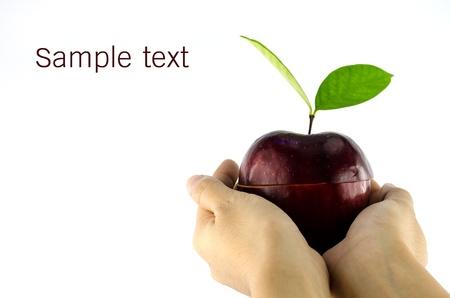maçã vermelha nas mãos da mulher