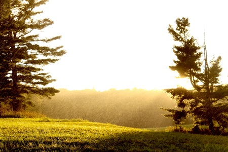 Sun Lit Field