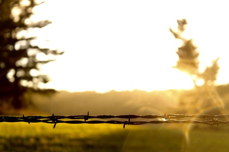 Barbed Wire in the Sun