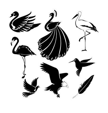 independency: Birds