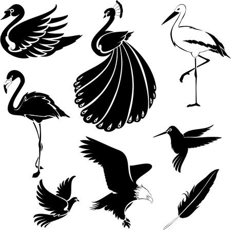 plumas de pavo real: Aves artística Vectores