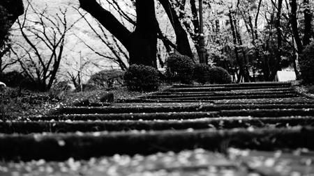 Jangbok Mountain Sculpture Park Stockfoto