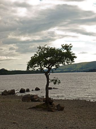 loch lomond: A tree and rocks in the foreground at Loch Lomond in Scotland.
