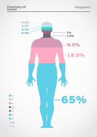 human body: Human infographics