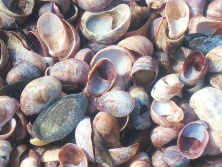 linea de flotaci�n: Conchas marinas en la l�nea de flotaci�n