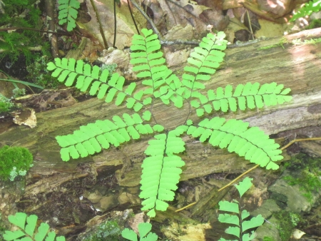 Unusual Flower Shaped Fern