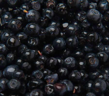 bilberries: Bilberries close up