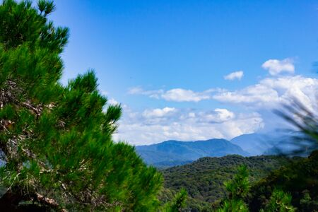 Mountains with Christmas trees against the blue sky with clouds. Beautiful panoramic view of firs and larches coniferous forest against blue sky. Stock Photo