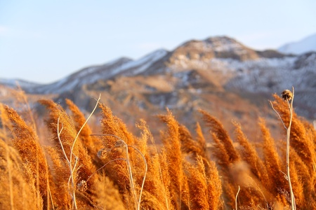 salt lake city: El natural de Salt Lake City