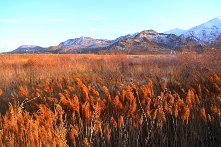 salt lake city: El campo de hierba de Salt Lake City