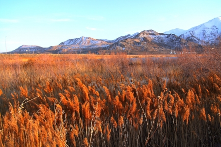 The Grassy Field of Salt Lake City photo