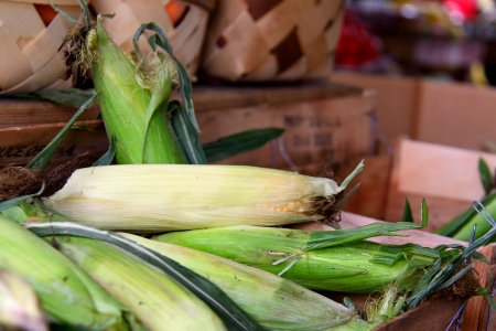 Sweet Corn On The Cobs photo