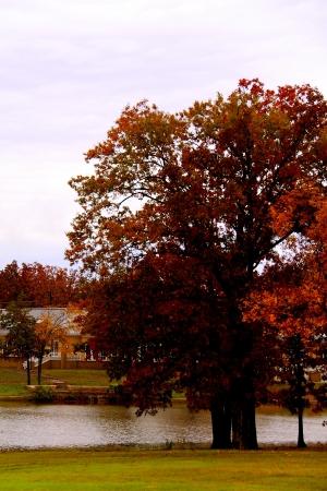 Paysage d'automne coloré
