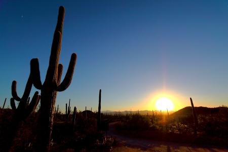 desert animals: Parco nazionale del Saguaro, Arizona Tucson