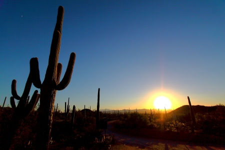 arizona sunset: Saguaro National Park, Tuscon Arizona