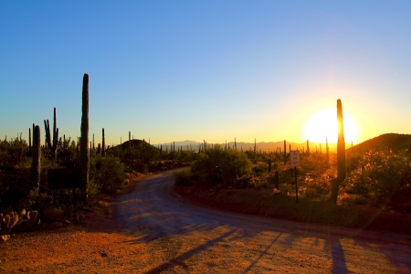 Sunrise at Saguaro National Park, Tuscon Arizona photo